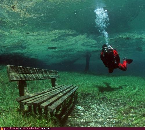 bench,ocean,pigeons,scuba