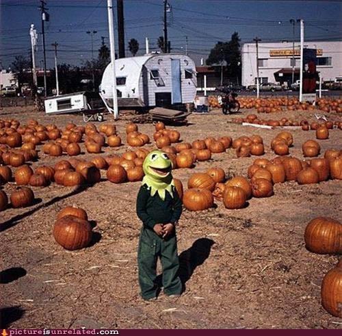 kermit,pumpkins,trailers