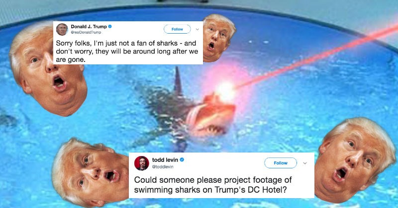 Collection of the funniest conspiracy theories on Donald Trump's obsession with sharks.