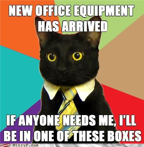 boss Business Cat cat meme package - 4577048576