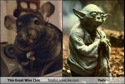 animals chinchilla star wars yoda - 4577302016