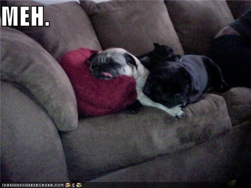 apathetic,couch,lazy,meh,pug,tired