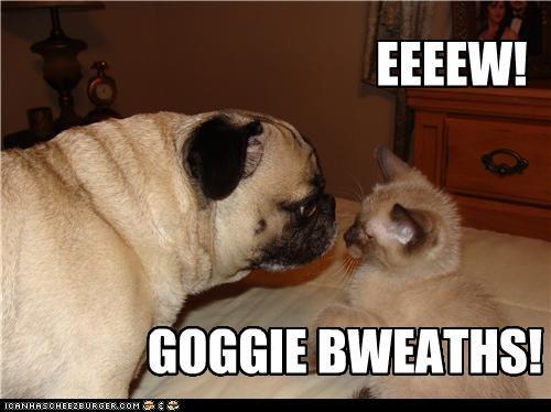 EEEEW! GOGGIE BWEATHS!
