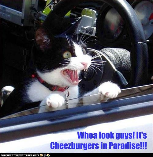 Cheezburger Image 4577459968