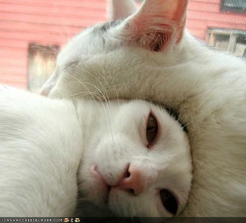 cuddles cuddling cyoot kitteh of teh day face life friends napping sleeping stretched two cats - 4577985024