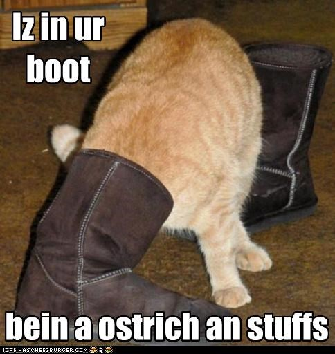 boot caption captioned cat im-in-your ostrich prefix stuck suffix tabby - 4578302976