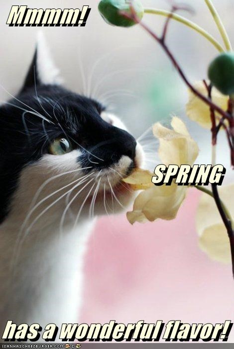 caption captioned cat flavor Flower mmmm noms spring wonderful