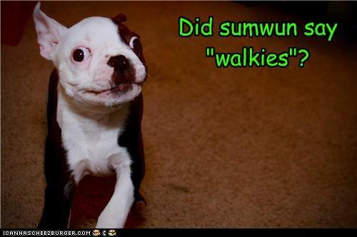 """Did sumwun say """"walkies""""?"""