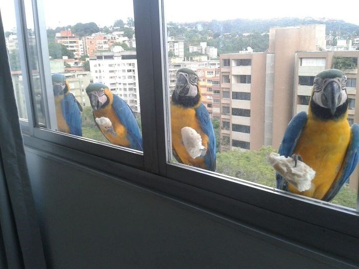 birds visiting windows of homes