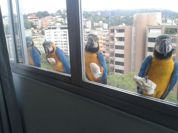 birds photos windows visit funny - 4579845