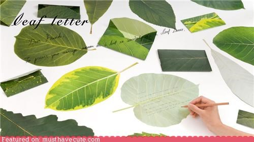 leaves letters note paper stationary writing - 4579928832