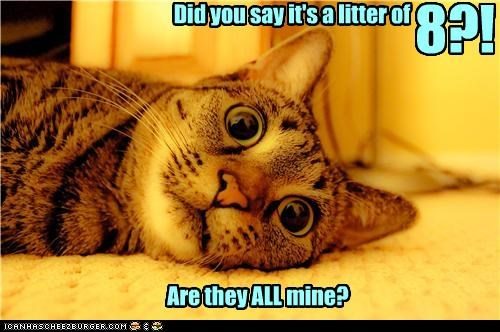 Did you say it's a litter of 8?! Are they ALL mine?