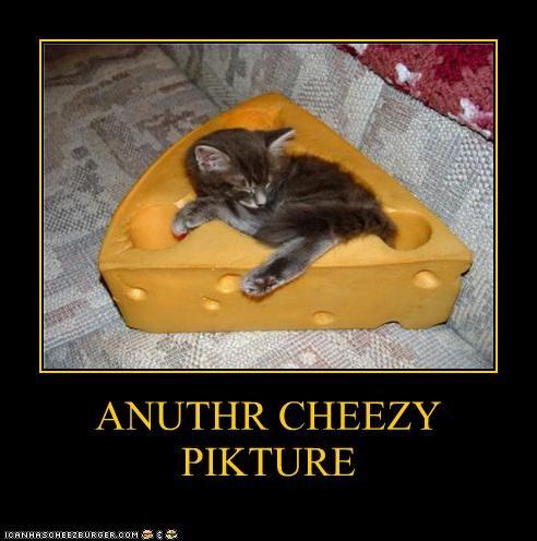 Cheezburger Image 4580525056
