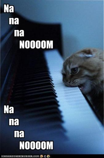 best of the week caption captioned cat Hall of Fame nom piano playing singing - 4580735744
