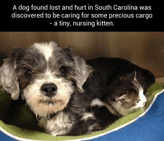 friendship dogs saving kitten story Cats lost - 4580869