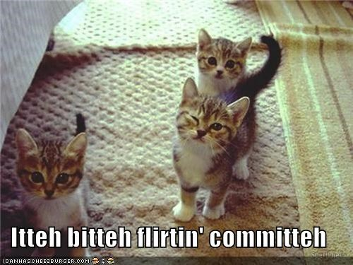 caption captioned cat Cats flirting itteh bitteh kitteh committeh kitten wink winking - 4580991744