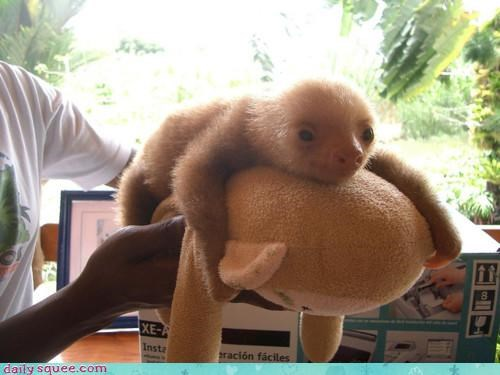 baby fitting hugging king palanquin parading sloth squee stuffed animal - 4581046016