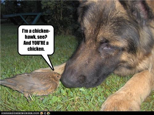 bird,chick,chicken,chicken hawk,explanation,german shepherd,looney toons,mixed breed,talking