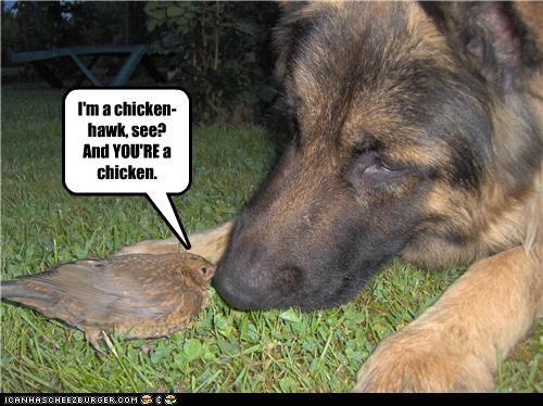 bird chick chicken chicken hawk explanation german shepherd looney toons mixed breed talking - 4581075712