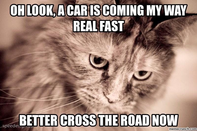 Memes logic Cats - 4581381