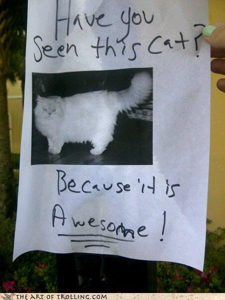 awesome,cat,flyer,have you seen,IRL,poster