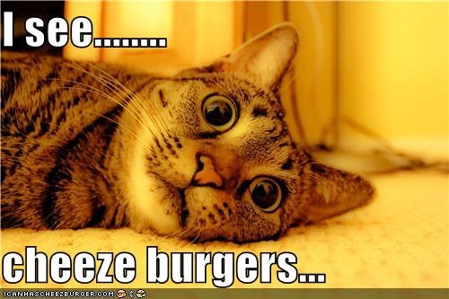 Cheezburger Image 4581742592