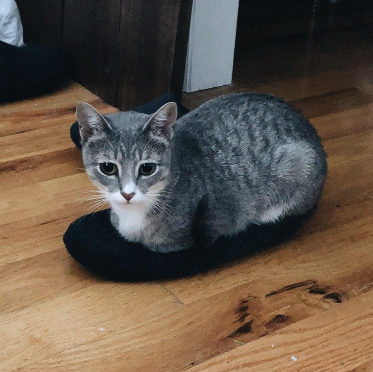 cats catloaf