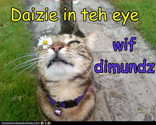 Daizie in teh eye wif dimundz