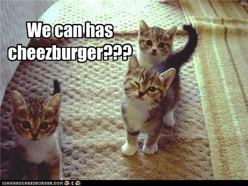 Cheezburger Image 4581999360