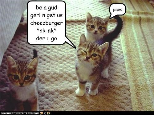 Cheezburger Image 4582244864