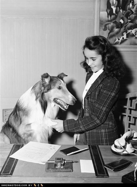 classic collie elizabeth taylor iconic lassie Movie r-i-p - 4582628096