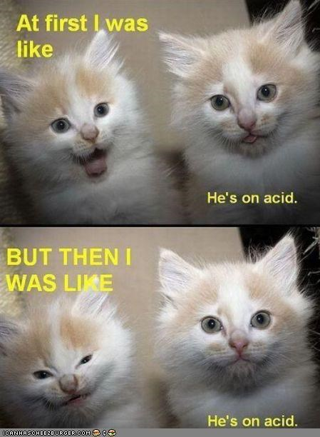 acid best of the week caption captioned drugs expressions Hall of Fame I Can Has Cheezburger multipanel two cats - 4583303168