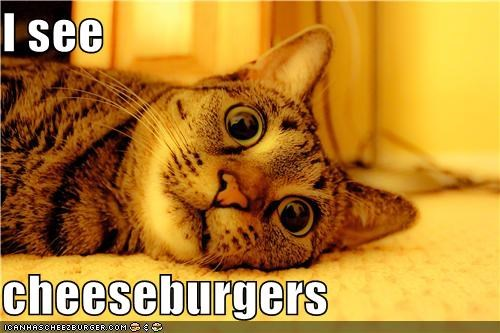 Cheezburger Image 4583324416