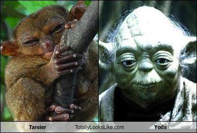 animals star wars tarsier yoda - 4583368448