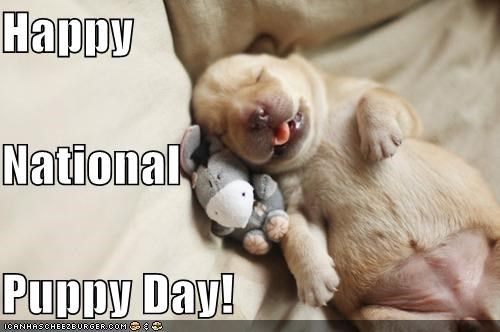 best of the week happy holiday National Puppy Day puppy whatbreed
