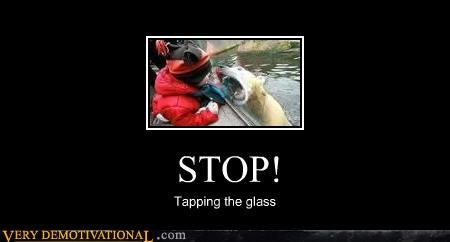 polar bear,stop,tapping the glass