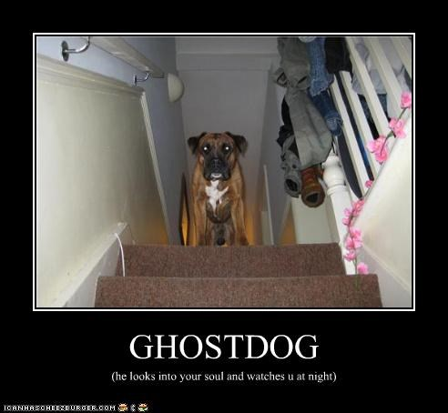 GHOSTDOG (he looks into your soul and watches u at night)