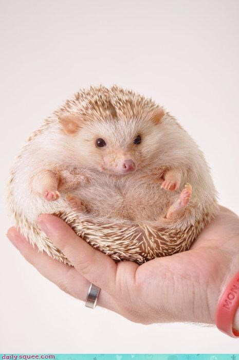 carbo-loading chubby excuse fat hedgehog pudgy robust semantics sonic - 4584082176