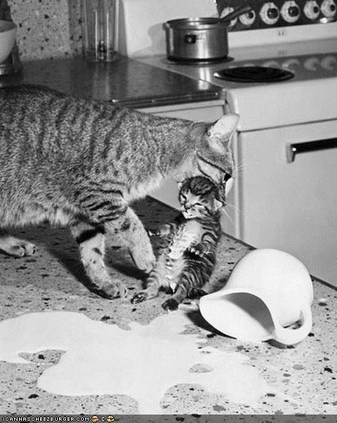 black and white,cyoot kitteh of teh day,kitchen,mad,messy,milk,mom,oops,scruff of the neck,spill