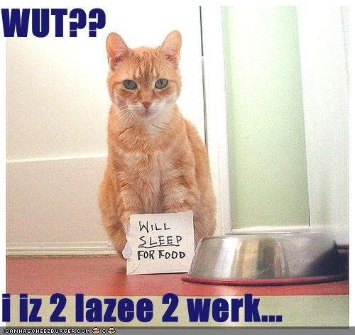 Cheezburger Image 4585053184