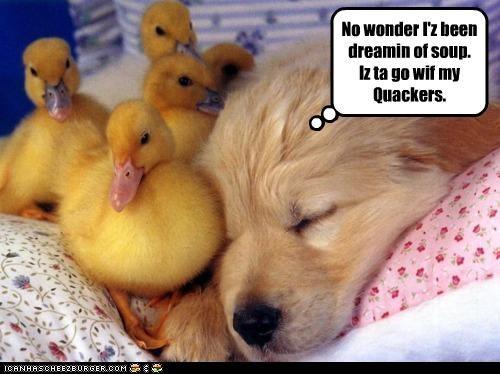 No wonder I'z been dreamin of soup. Iz ta go wif my Quackers.