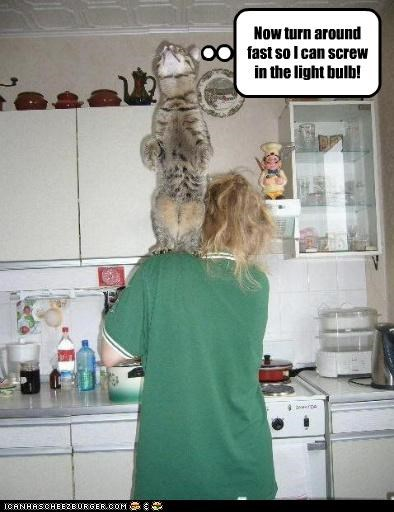 around caption captioned cat fast human lightbulb reason screwing shoulder standing turn turn around