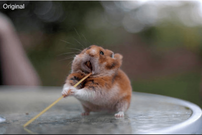 a funny list of a photoshop battle with a hamster putting something in his mouth