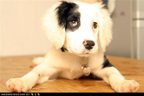 best of the week,deaf,forever home,heartwarming,learning,puppy,rescued,sign language,springer spaniel,touching,training