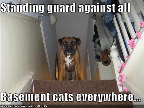 basement basement cat boxer everywhere guard guarding stairs standing