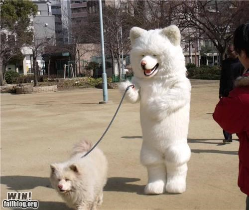 animals,costume,cute,Japan,pets,wtf