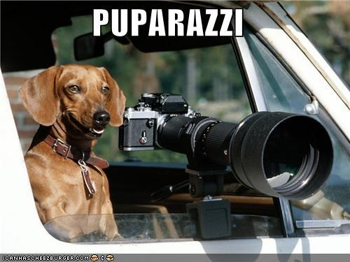 photography camera pun pup paparazzi photographing dachshund - 4586400256