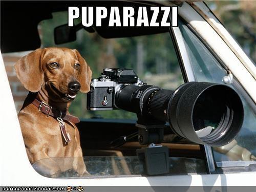 camera dachshund paparazzi photography pun pup - 4586400256
