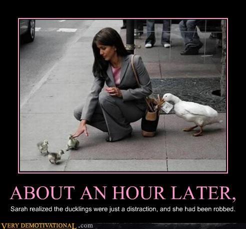 animals ducks thieves - 4586411776