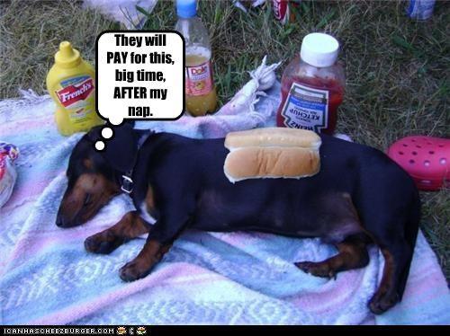 Cheezburger Image 4586438656
